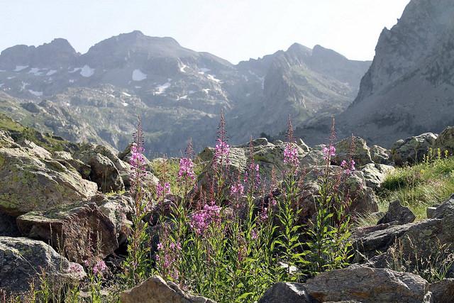 Vue d'une montagne pendant une randonnée dans le Mercantour.