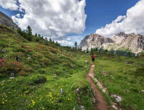 La flore des Alpes-Maritimes à retrouver en randonnée