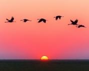 Oiseau en pleine migration.