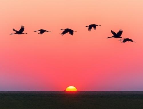 Oiseaux : Comment les reconnaître et les observer ?
