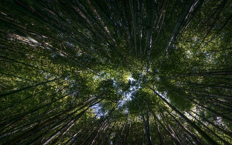 Photo d'arbres verts nombreux.
